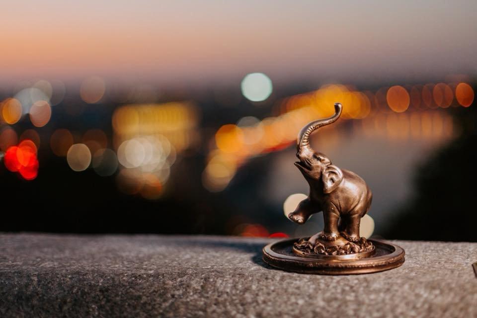 Слоник із бронзи: у Києві з'явилася нова скульптура від проекту «Шукай»