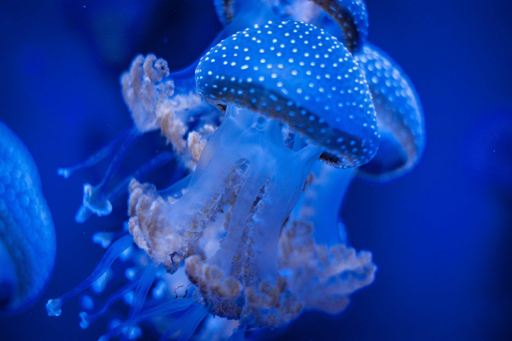 Kyivmaps в Музее медуз