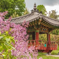 Киевский ботанический сад имени Гришко: календарь цветения