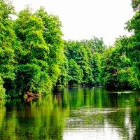 Дача, здравниця, лісове господарство: ТОП фактів про Пущу-Водицю