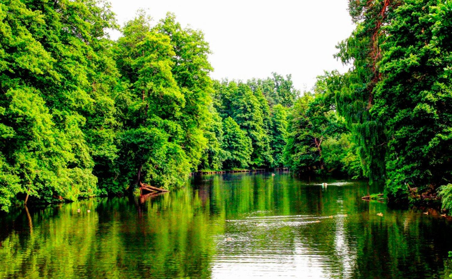 ТОП-5 фактов про Пущу-Водицу: дача, здравница, лесное хозяйство