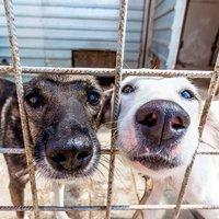 6 приютов для животных в Киеве и области